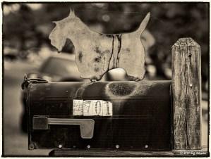 Doggie Mailbox