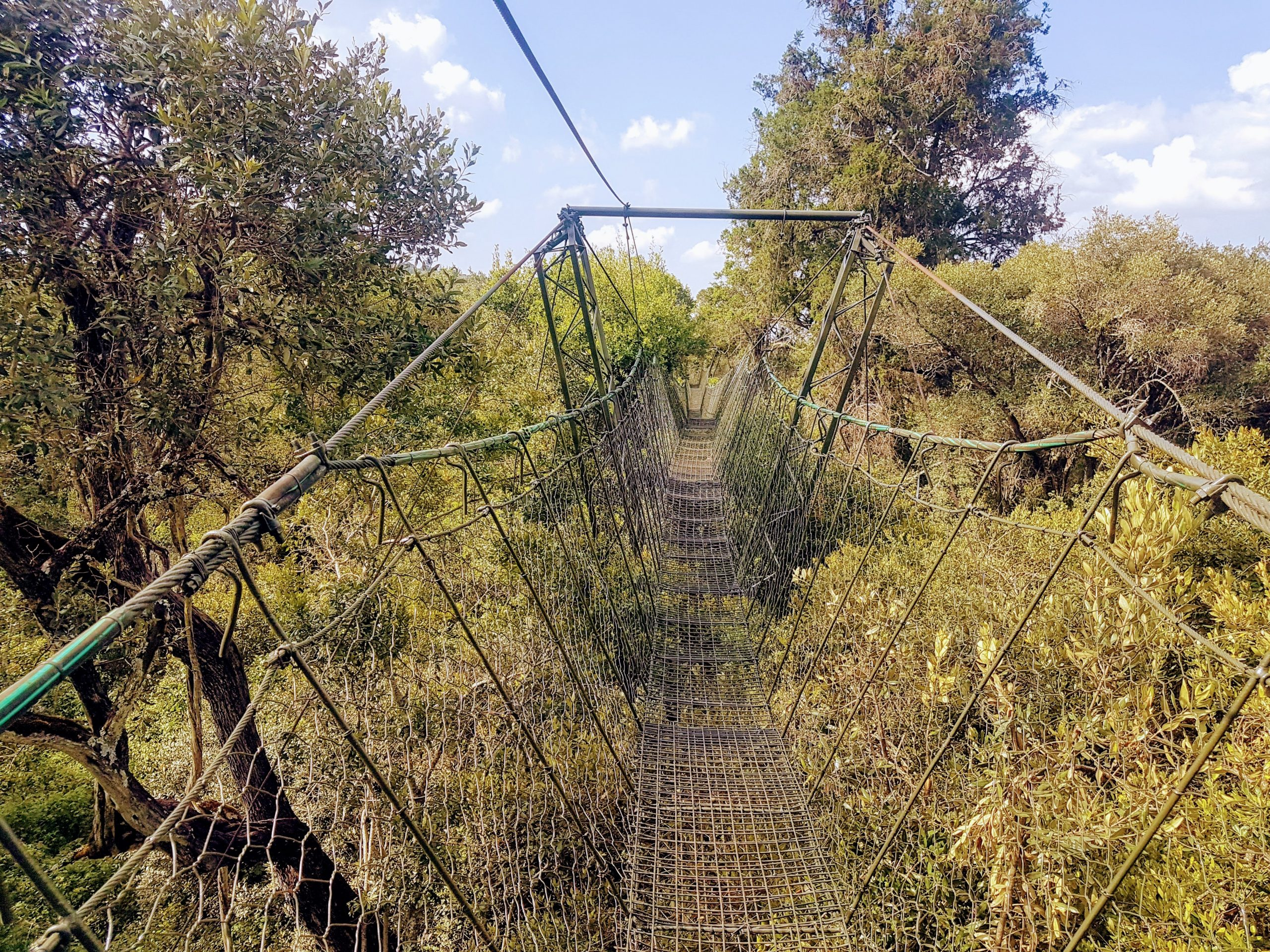 One Day trip to Nanyuki, Hiking Ngare Ndare Forest