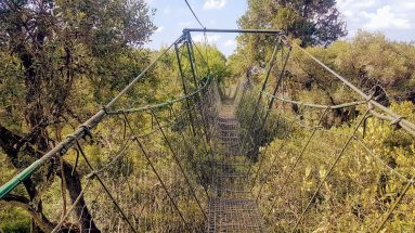 Ngare Ndare Canopy Walk