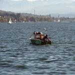 Zürichsee | Bild 03