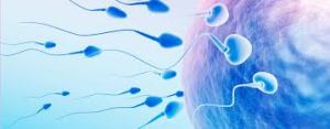 Male Sterility Facts