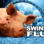 infant swine flu vaccine flu vaccine swine flu vaccine polyethylene glycol p-isooctylphenyl