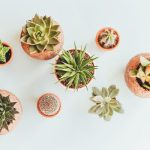 How to Select the Best Indoor Plants