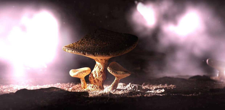 3D magic mushrooms Pilz