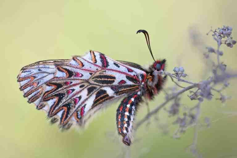 Beautiful Butterfly Wings