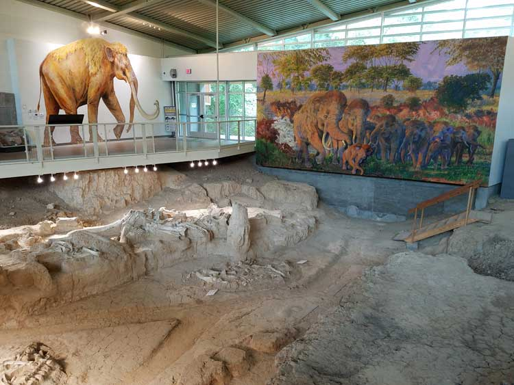 big trip 13 learning about the waco mammoth in waco texas