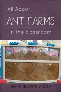 ant farm in the classroom life cycle habitat study