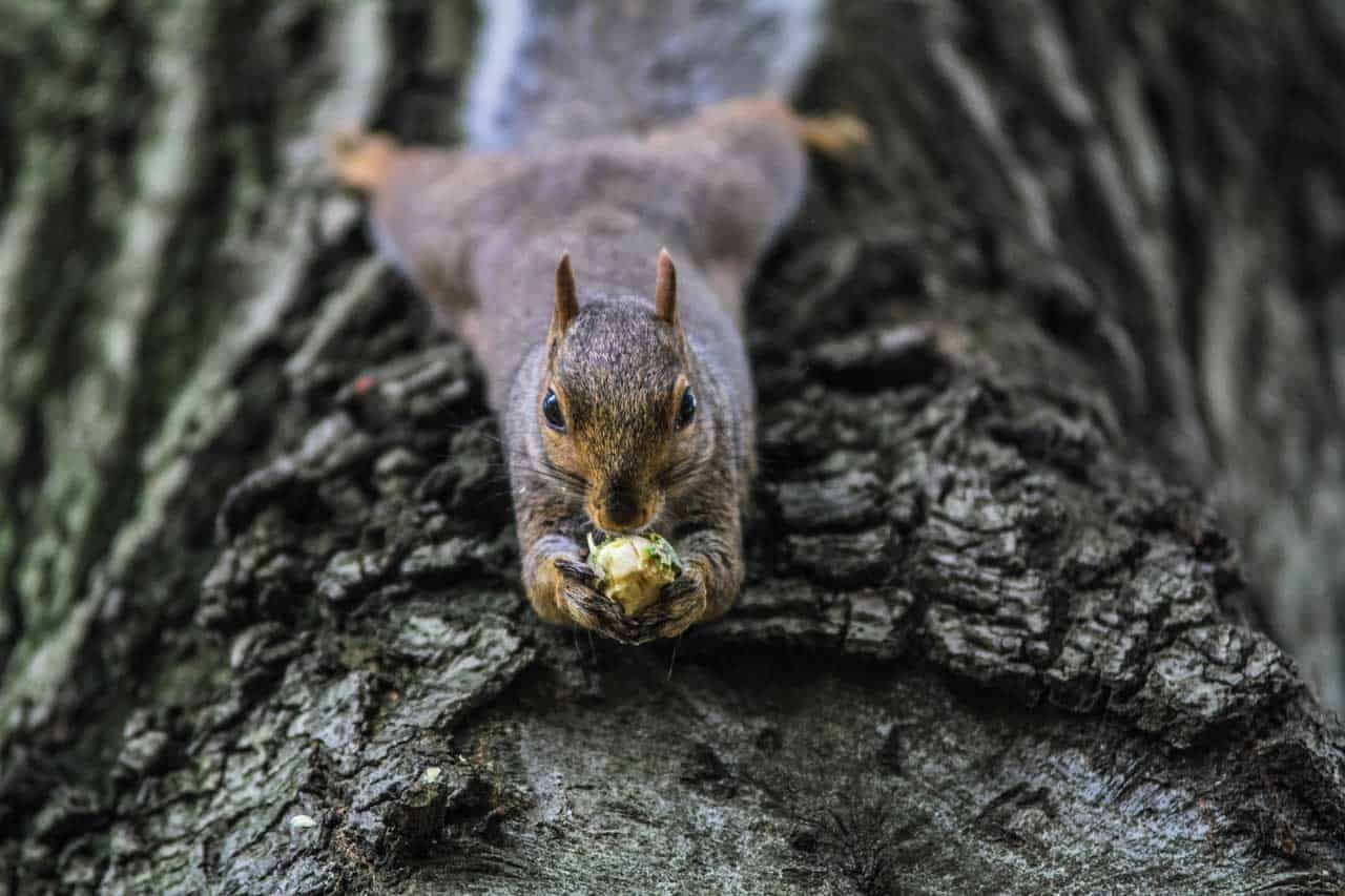 Squirrel! via @behindeveryday