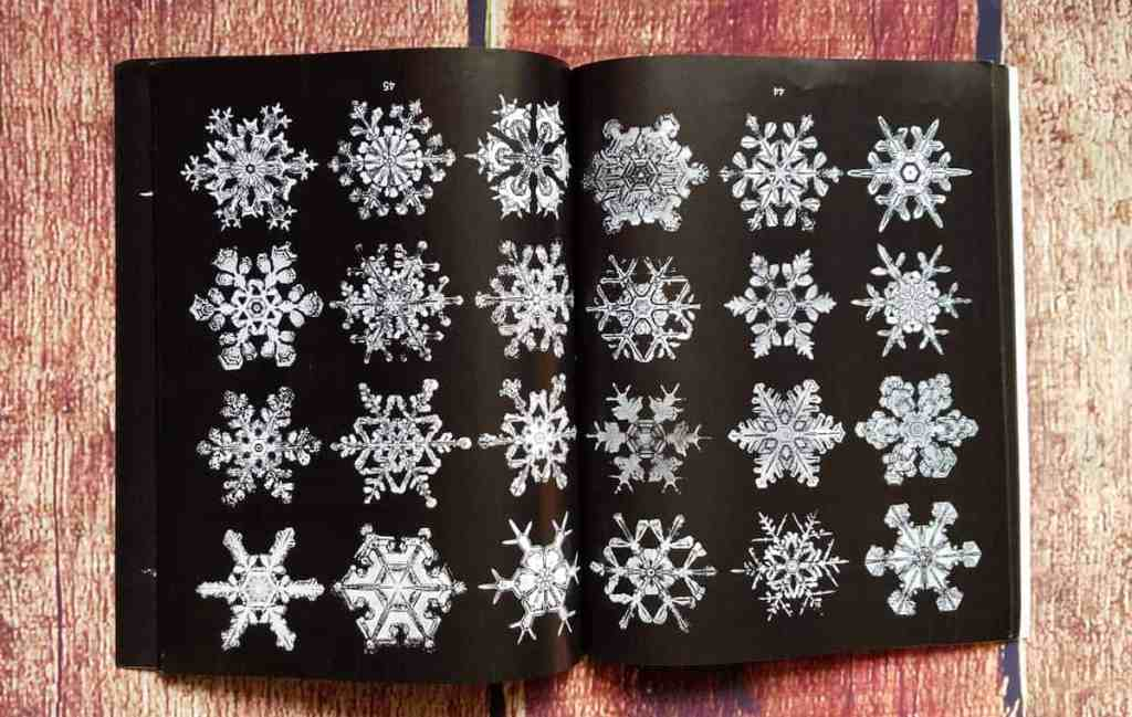Another interior page of Photographs of Snowflakes by W. A. Bentley show radial symmetry of snow crystals. So many beautiful flakes!