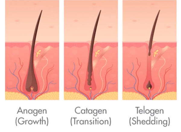 what causes hair loss and thinning and surface awaken scalp facial for visible hair growth