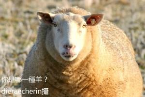 BH69-06-7690-圖2-你是哪一種羊-IMG_6670_c.By dieraecherinr