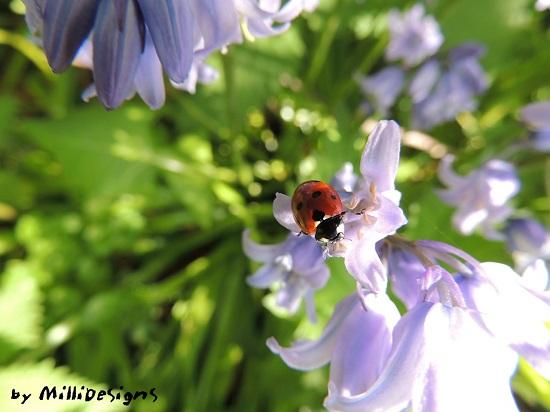 7764-圖6-by MilliDesigns-ladybird-449333_1280