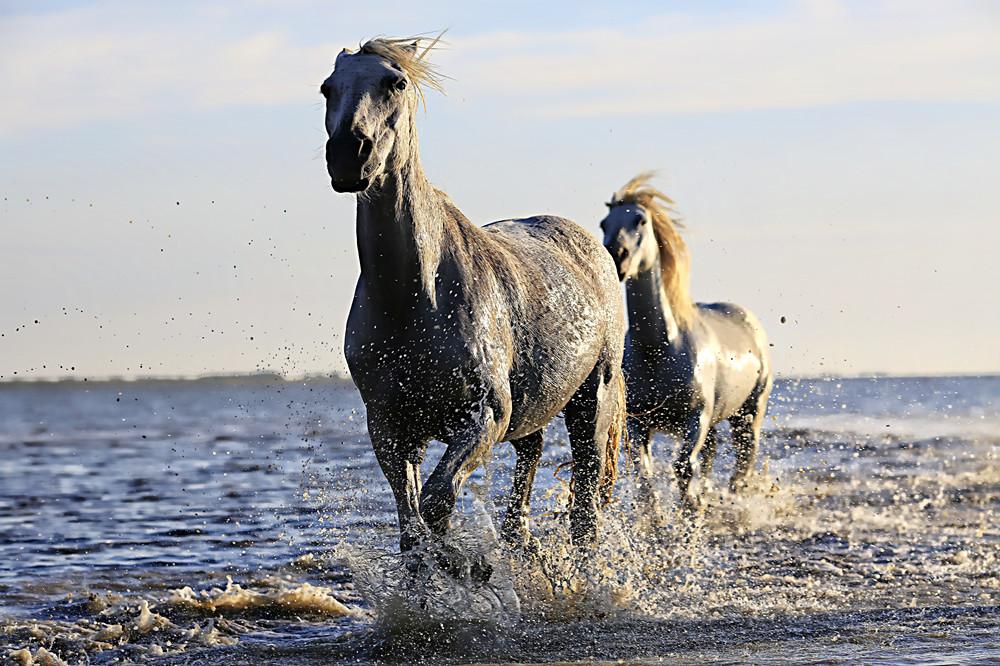 bh80-18-8324-%e5%9c%961-by-photo-graphe-horse-1542480
