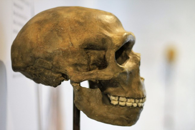 Archeologisch museum Velzeke - binnen - collectie - 001 de mens