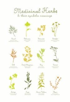 medicinal-herbs-poster-02