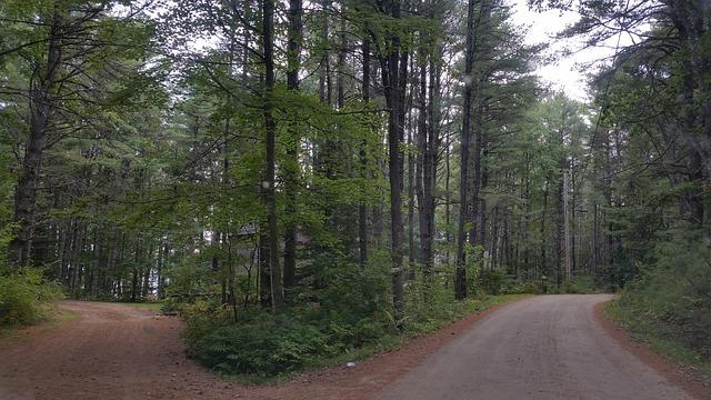 Path Crossroad