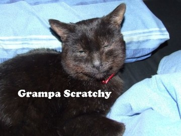 TheCats3_GrampaScratchy