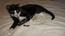 TheCats4_Magic