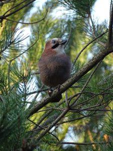 Woodpecker in Ustka