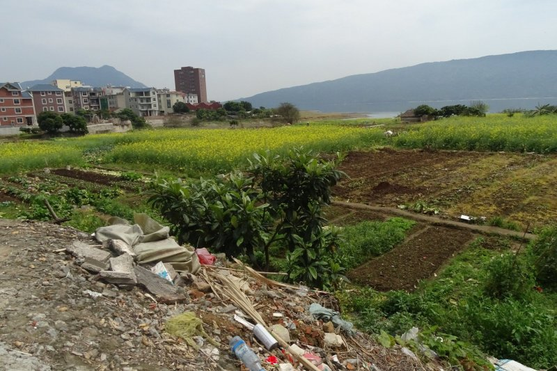 Canola farm on right, Dongzhanzhen village on left