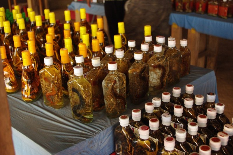 Snake wine bottles with various species of snake in them.