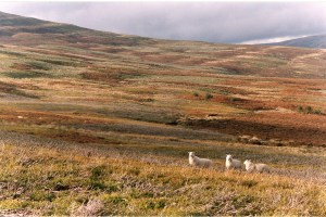 Walk and Wonder - take to the liberating expanses of the hill tops Black Mountains Brecon Beacons