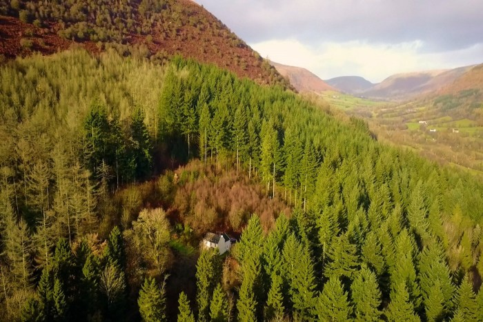 being at the cottage - graig ddu - the cottage in the forest