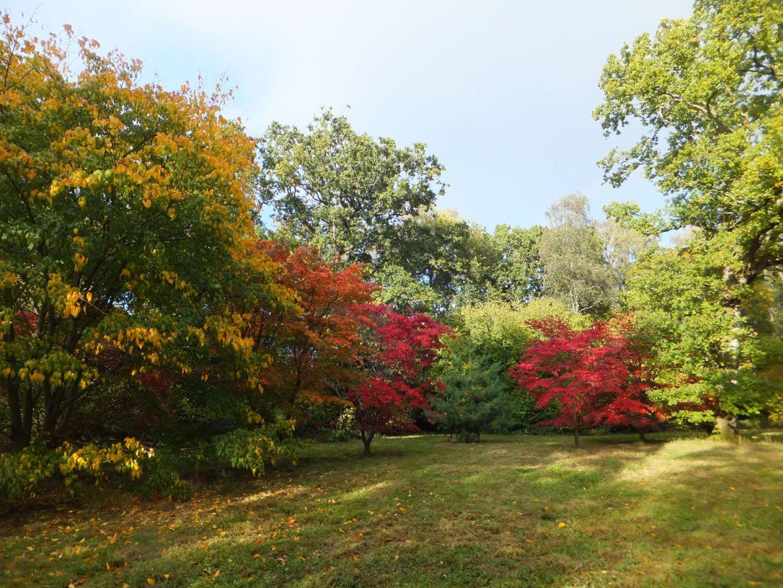 An Autumn trip to Westonbirt Arboretum