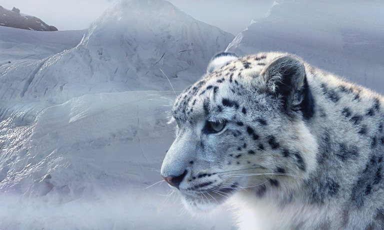 Snow Leopard Expedition in Spiti Valley