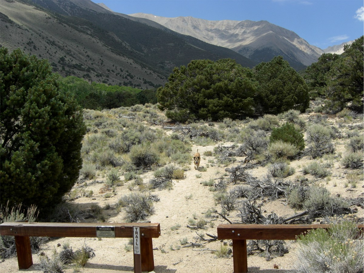 Trip Report: White Mountains or Bust! (California /Nevada, USA) Day 5
