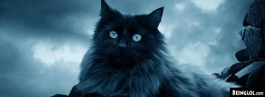 Wallpaper Kitty Hd Animal Facebook Covers Timeline Covers Amp Profile Covers