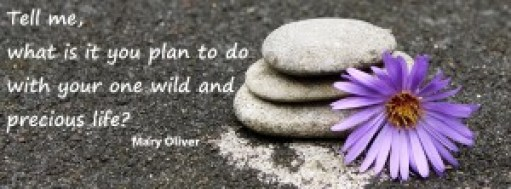 Tell me, what is it you plan to do with your one wild and precious life? (Mary Oliver)