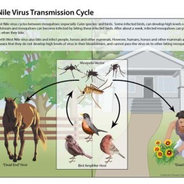 West Nile Virus Fever is Here!