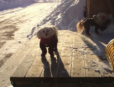 snow-play-2