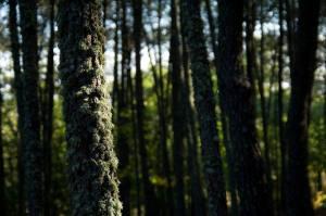 Pinhel avança com projeto de Parque Verde na localidade de Freixedas