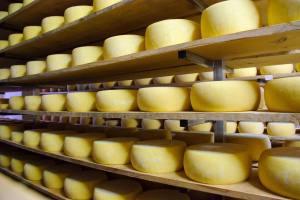 InovCluster quer valorização económica dos queijos DOP da região Centro