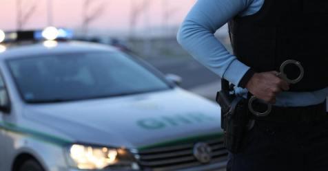 """GNR detetou 92 cães num canil do concelho de Gouveia """"sem condições"""""""