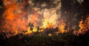 Fogo no Sabugal mobiliza 184 bombeiros