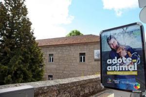 Município da Guarda promove campanha para adoção de animais de companhia