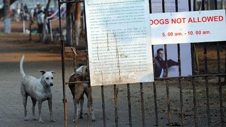 Stray dogs, the Turf Club, Mumbai