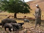 10 Tribes Eat With The Swine