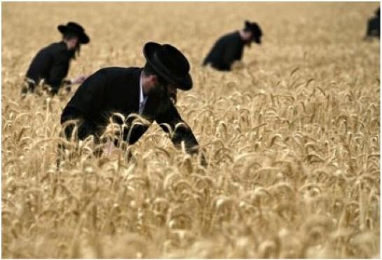Septennial (Shmita – שמיטה) Torah Cycle By Rabbi Dr. Hillel ben David (Greg Killian)