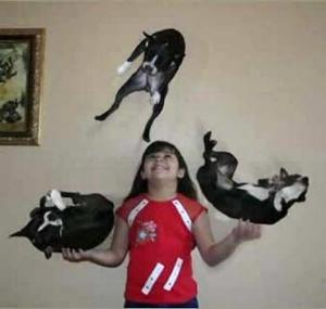 cat-juggling.jpg