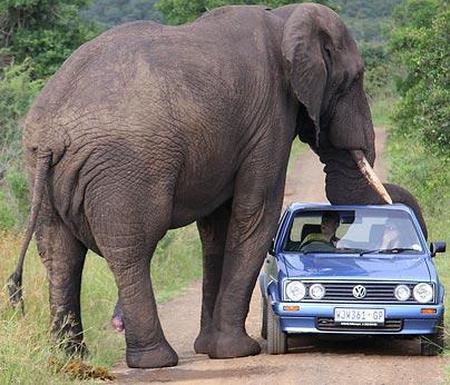 elephant-kid.jpg
