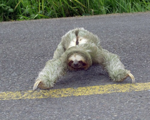 sloth20051small.jpg