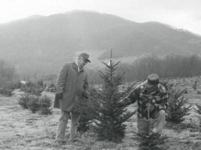 christmas-trees-at-waynesville-research-station_1976use.jpg