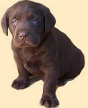 puppy_187.jpg