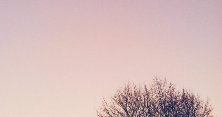 What I Love : February