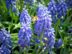Bee Photo copyright Rebecca Lau