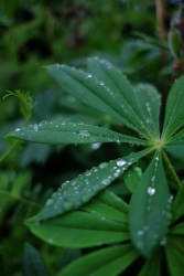 Post-rain Photo copyright Rebecca Lau